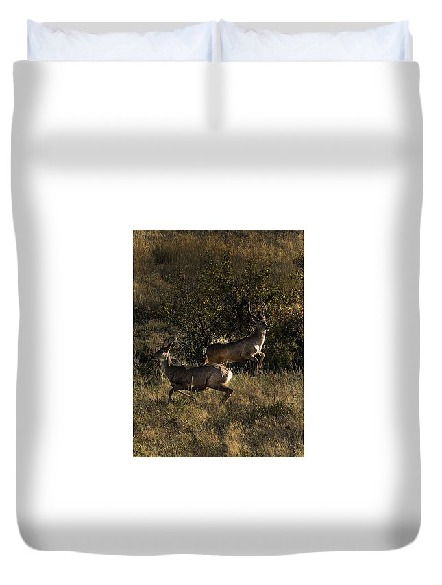Deer Duvet Cover featuring the photograph Jumping deer by Roy Nierdieck