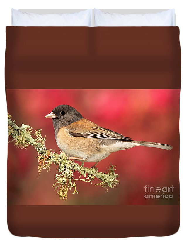 Bird Duvet Cover featuring the photograph Junco Against Peach Blossoms by Max Allen