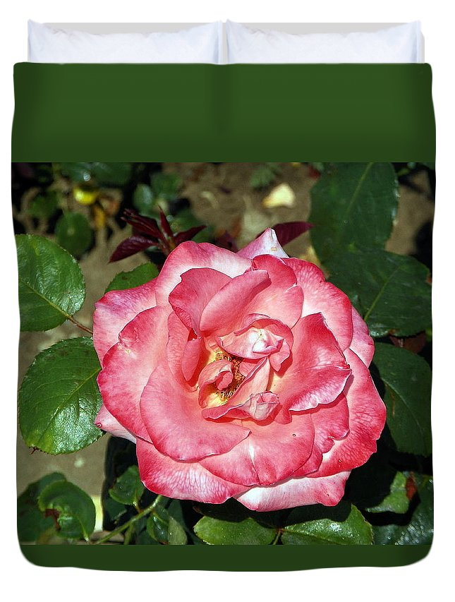 Ordinary Rose Duvet Cover featuring the photograph Just A Rose by Vineta Marinovic