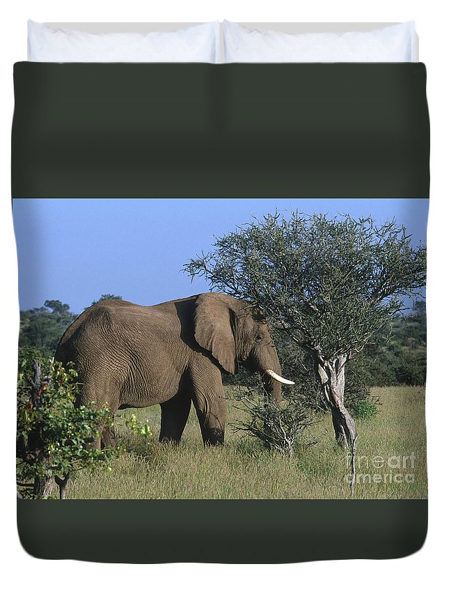 Africa Duvet Cover featuring the photograph Just Browsing by Sandra Bronstein
