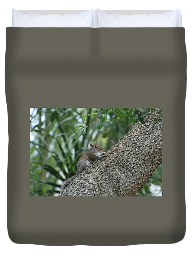 Squirrels Duvet Cover featuring the photograph Just Chilling Out by Rob Hans
