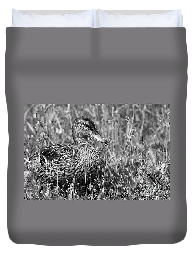 Duck Duvet Cover featuring the photograph Just Ducky Bw by Sharon Talson