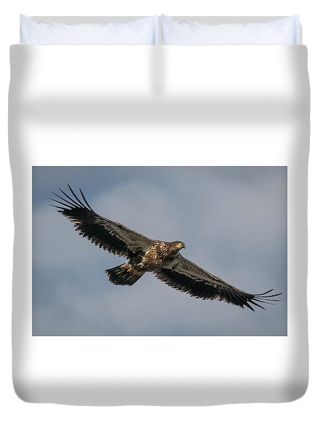 Eagle Duvet Cover featuring the photograph Juvenile Bald Eagle 01 by Alvin Sangma