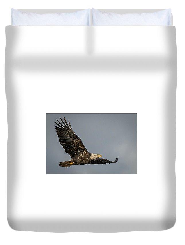 Eagle Duvet Cover featuring the photograph Juvenile Bald Eagle 02 by Alvin Sangma
