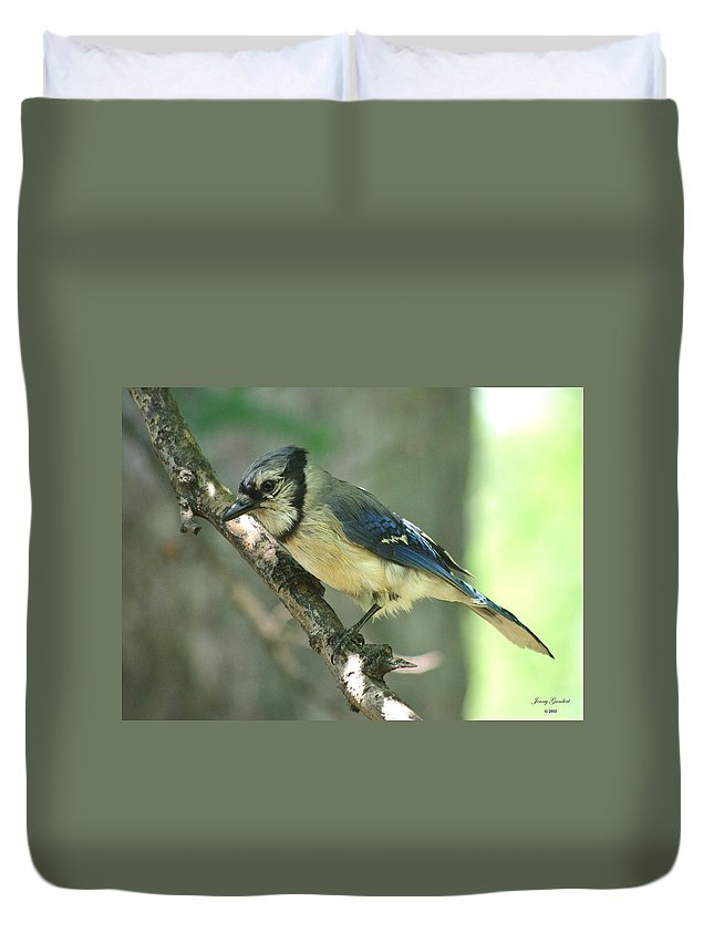 Duvet Cover featuring the photograph Juvenile Blue Jay by Jenny Gandert