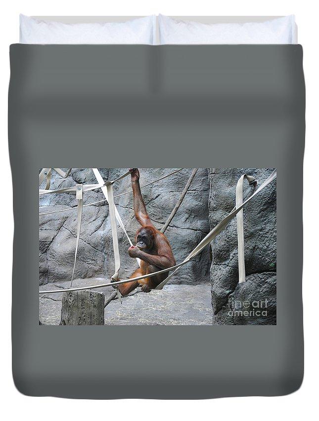 Orangutan Duvet Cover featuring the photograph Juvenile Orangutan by Lana Raffensperger