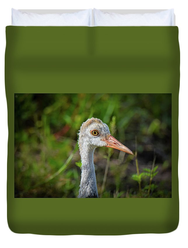 Sandhill Crane Duvet Cover featuring the photograph Juvenile Sandhill Crane Portrait by John Ruggeri