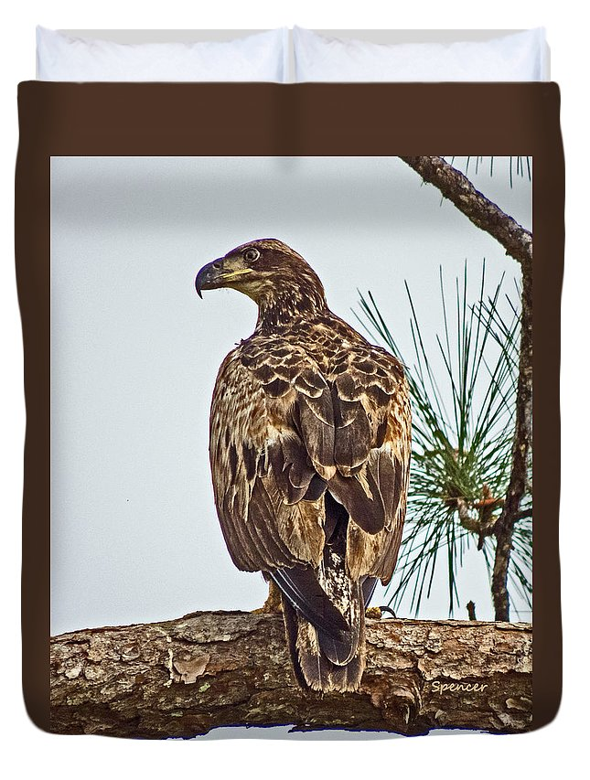 Bird Duvet Cover featuring the photograph Juvenile by T Guy Spencer