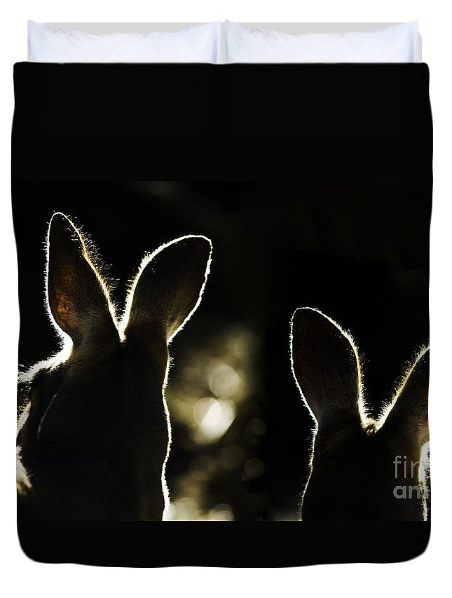 Kangaroo Duvet Cover featuring the photograph Kangaroos Backlit by Avalon Fine Art Photography