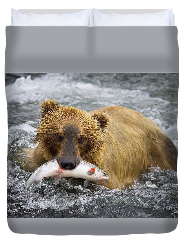 Grizzly Duvet Cover featuring the photograph Katmai Grizzly by Bruce Benson