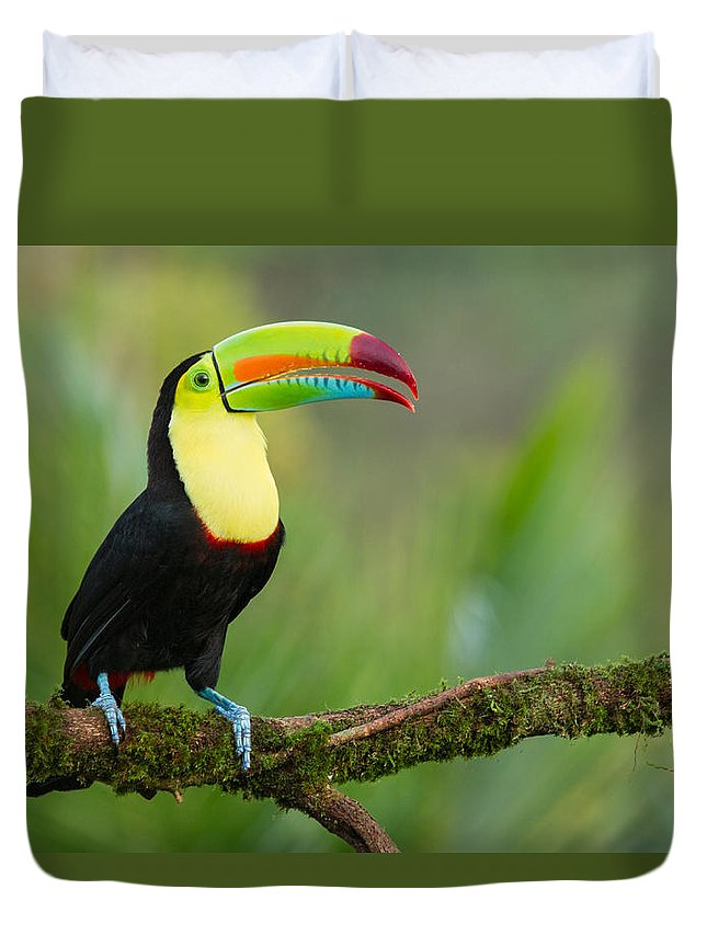 Birding Duvet Cover featuring the photograph Keel Billed Toucan Perched On A Branch In The Rainforest by Chris Jimenez