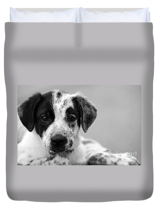 Dog Duvet Cover featuring the photograph Keep Me by Amanda Barcon