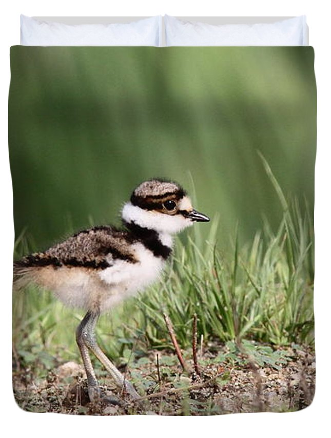 Nature Duvet Cover featuring the photograph Killdeer - 24 Hours Old by Travis Truelove