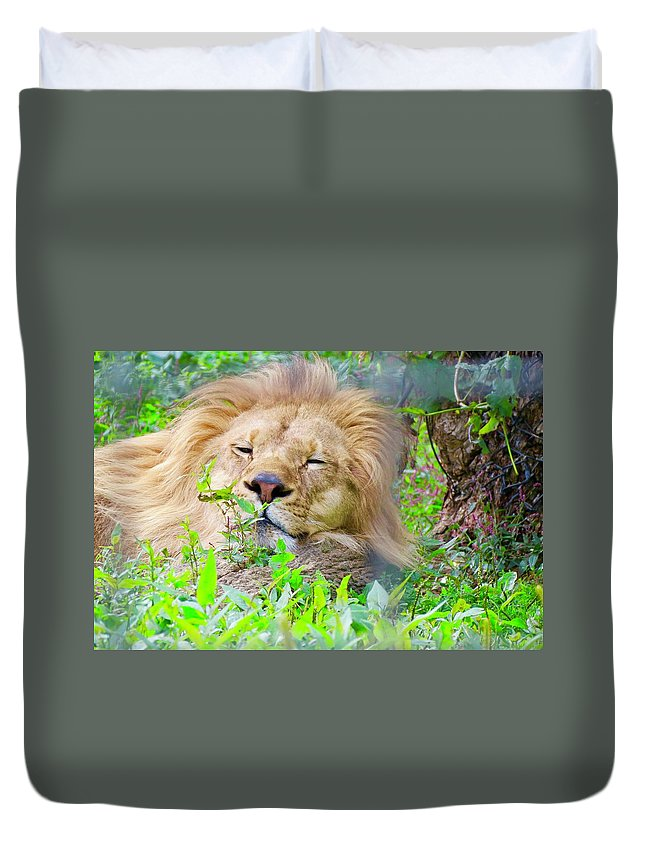 King Duvet Cover featuring the photograph King Of The Jungle by Kenneth Summers