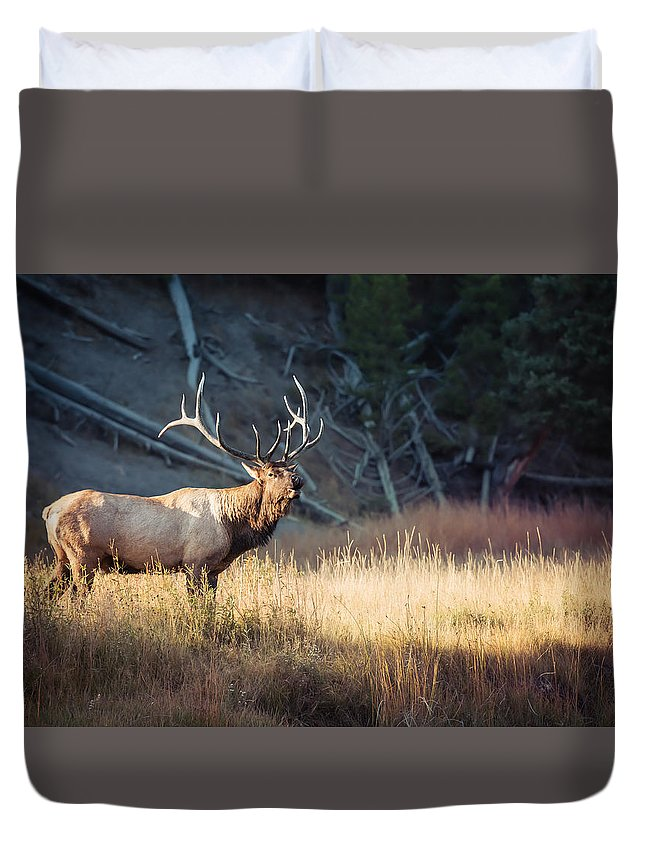 Animal Duvet Cover featuring the photograph King Of The Madison by Derek Haller