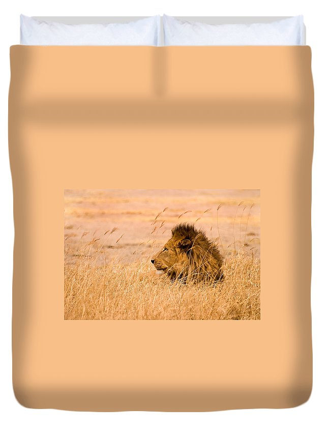 3scape Duvet Cover featuring the photograph King Of The Pride by Adam Romanowicz