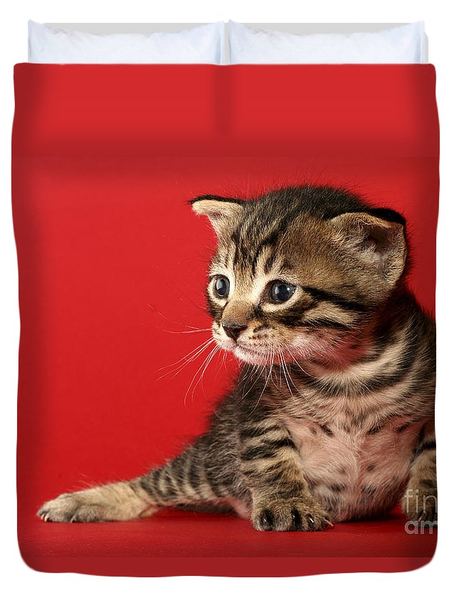 Cat Duvet Cover featuring the photograph Kitten On Red by Yedidya yos mizrachi