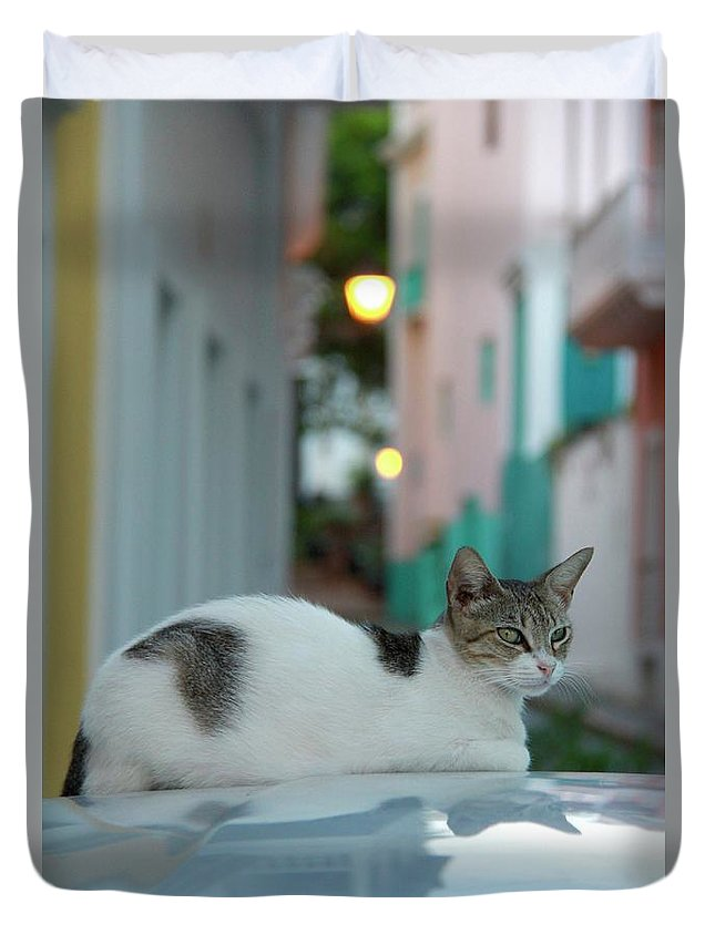 Old San Juan Duvet Cover featuring the photograph Kitten Reflections by Suzanne Oesterling