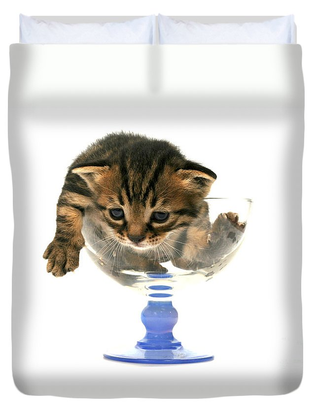 Cat Duvet Cover featuring the photograph Kitten Sits In A Glass by Yedidya yos mizrachi
