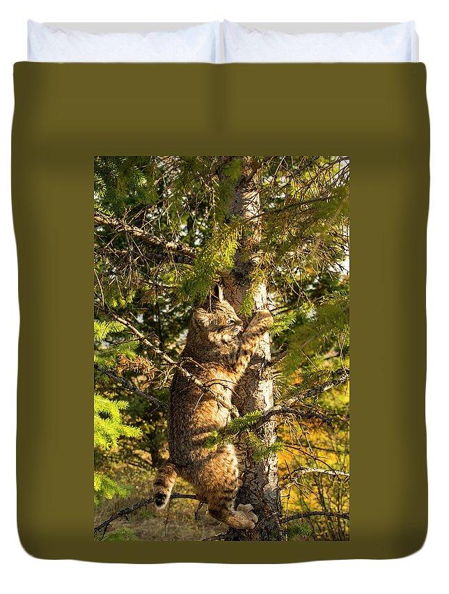 Bobcat Duvet Cover featuring the photograph Kitten up a tree by Roy Nierdieck