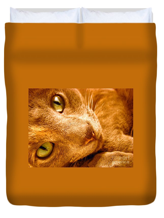 Cats Duvet Cover featuring the photograph Kitty by Amanda Barcon