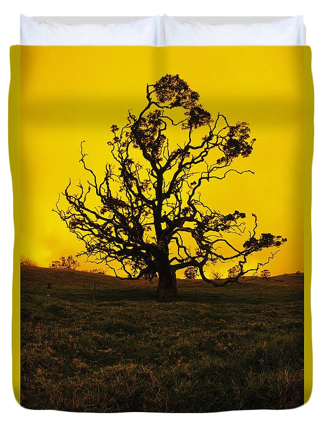 Alone Duvet Cover featuring the photograph Koa Tree Silhouette by Carl Shaneff - Printscapes