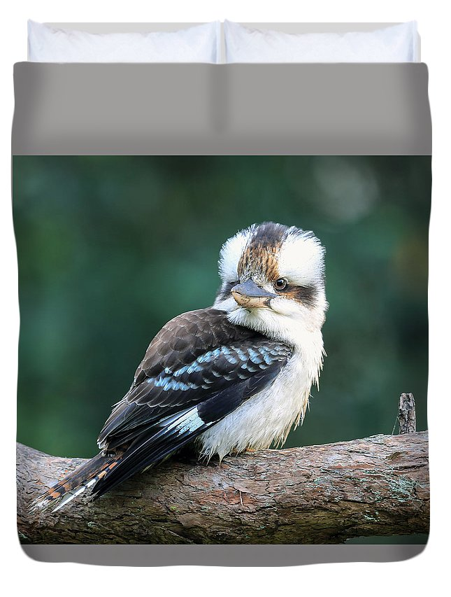 Duvet Cover featuring the photograph Kookaburra Australian Bird by David Trent