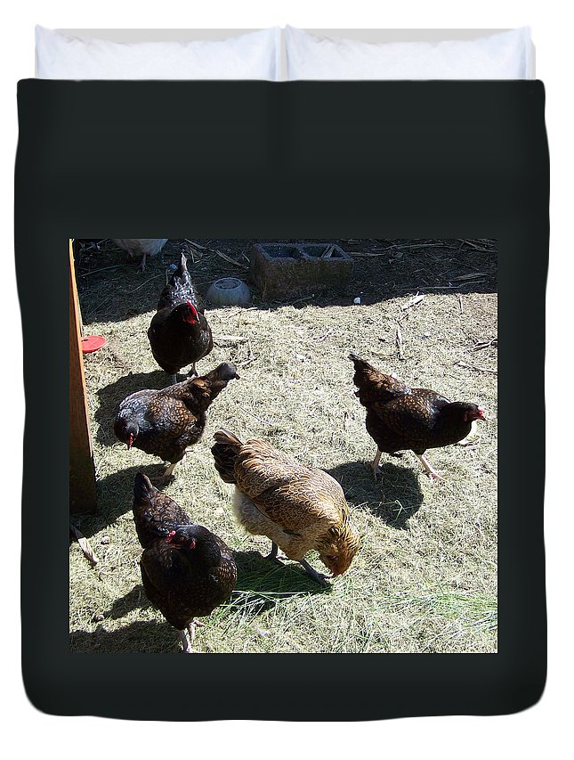 Hens Duvet Cover featuring the photograph Ladies Of The Pen by Laurie Kidd