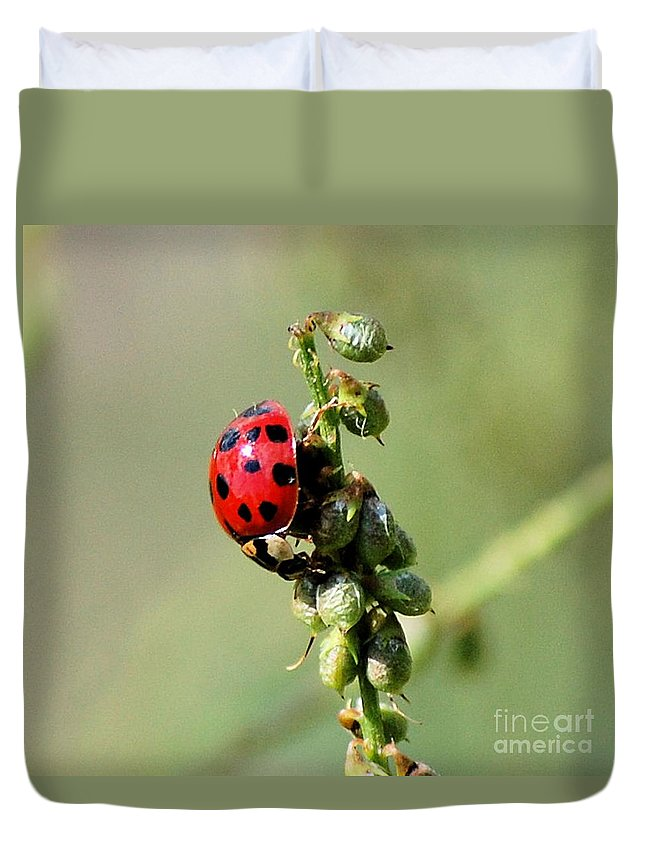 Landscape Duvet Cover featuring the photograph Lady Beetle by David Lane