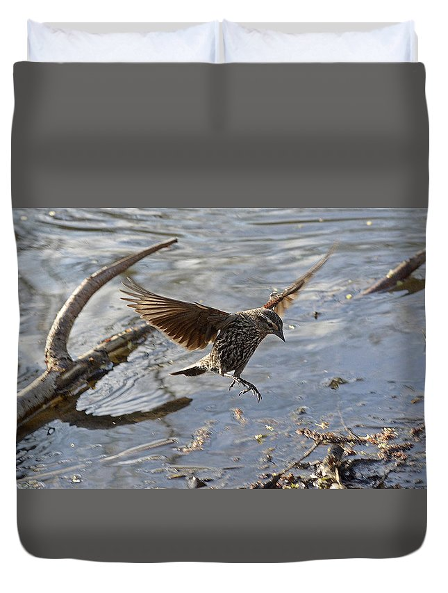 Red-winged Blackbird Duvet Cover featuring the photograph Lady Blackbird by Asbed Iskedjian