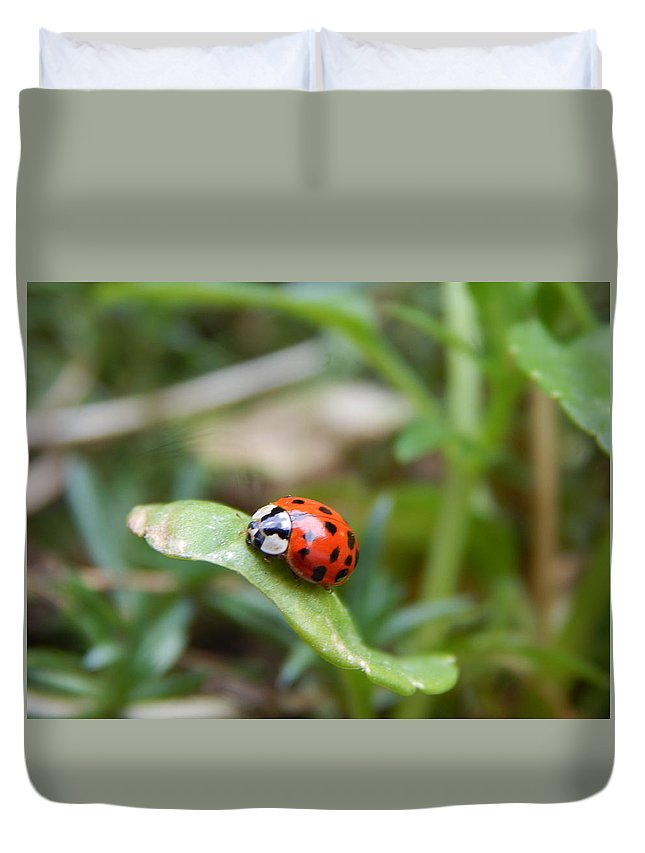Lady Bug Duvet Cover featuring the photograph Lady Bug by Amanda Holt