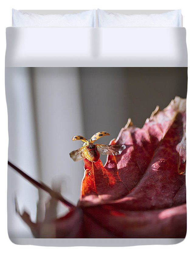Sky Is The Limit Images Duvet Cover featuring the photograph Lady Bug Flight by Becca Buecher