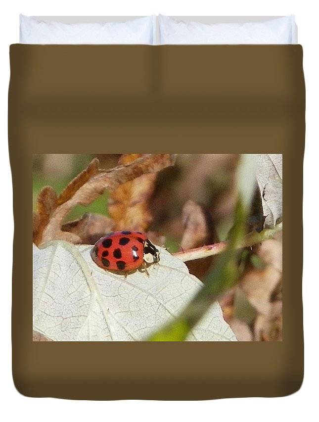 Nature Duvet Cover featuring the photograph Lady Bug by Peggy King