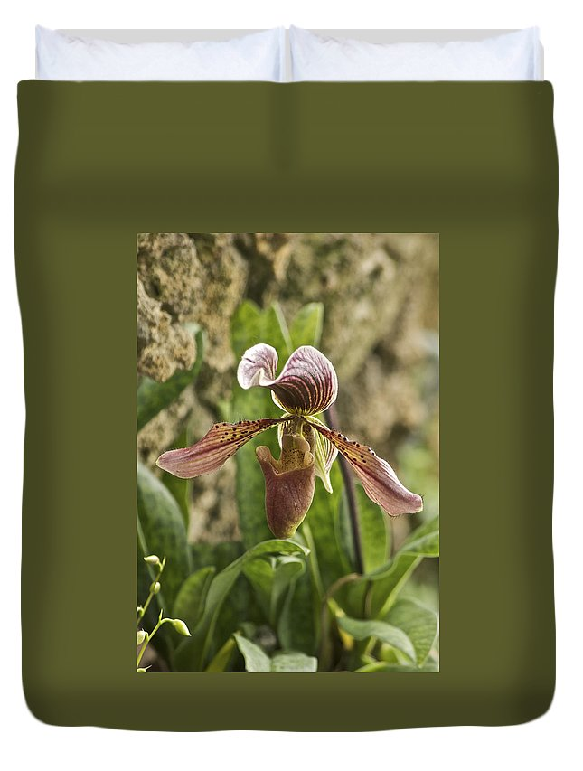 Orchid Duvet Cover featuring the photograph Lady Slipper 2 by Michael Peychich