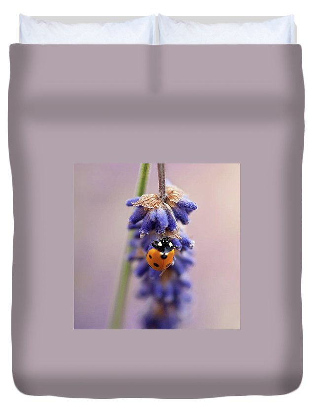 Ladybug Duvet Cover featuring the photograph Ladybird On Norfolk Lavender  #norfolk by John Edwards