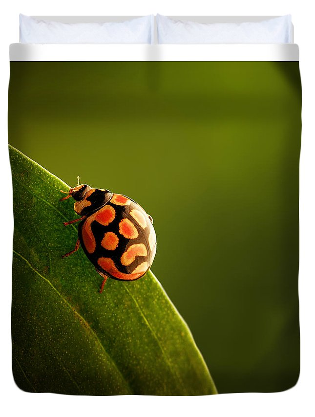 Ladybug Duvet Cover featuring the photograph Ladybug on green leaf by Johan Swanepoel