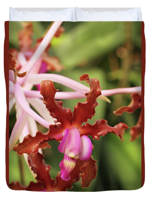 Orchid Duvet Cover featuring the photograph Laelia Undulata Orchid by Judy Whitton