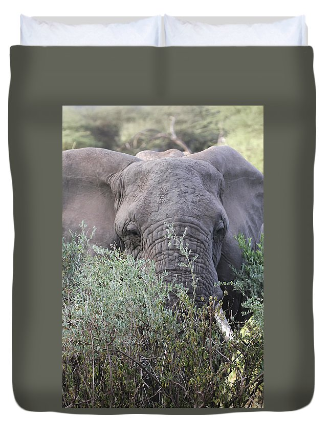 Gary Hall Duvet Cover featuring the photograph Lake Manyara Elephant by Gary Hall