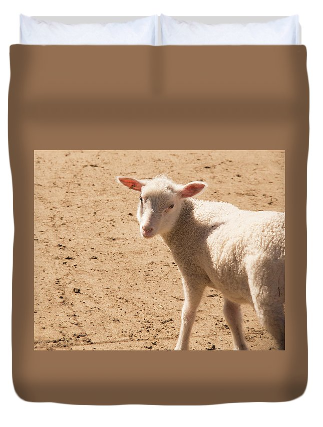 Sheep Duvet Cover featuring the photograph Lamb Looking Cute. by Diane Schuler