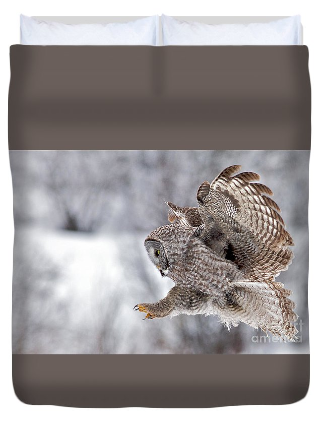 Great Grey Owl Duvet Cover featuring the photograph Landing Great Grey Owl by Daryl L Hunter