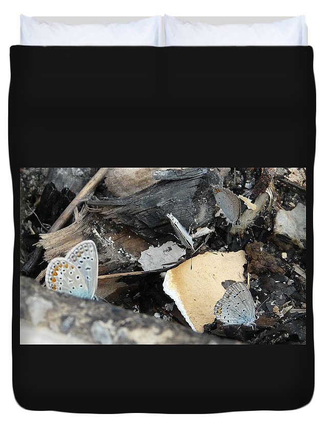 Maculinea Arion Duvet Cover featuring the photograph Large Blue Butterfly by Valerie Ornstein