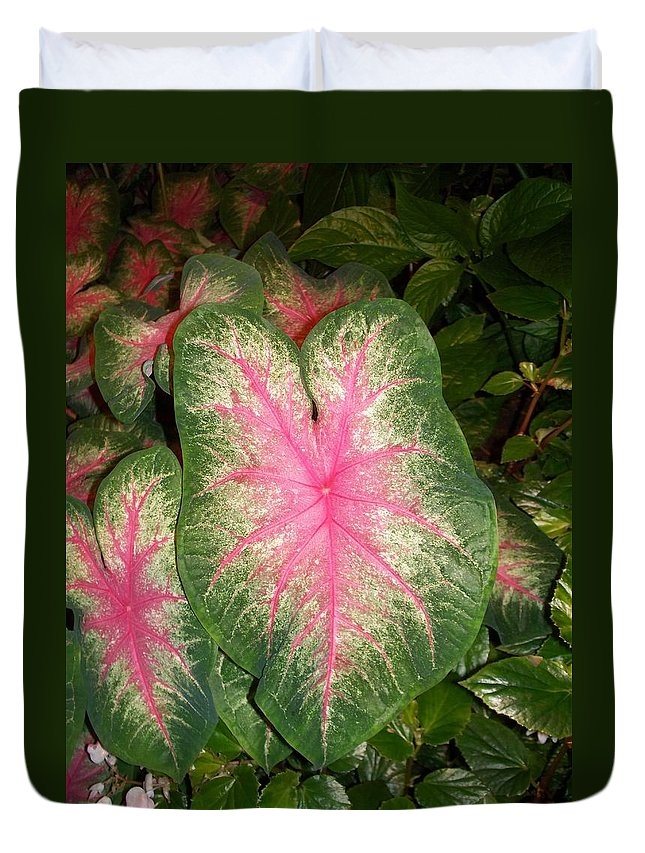 Nature Duvet Cover featuring the painting Large Coleus Plant by Eric Schiabor