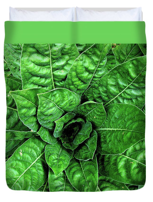 Spectacular Green Foliage Shades Different Life Garden Plants Krystyna Hrabina Charm Grace Centered Lively Nature Natural Art God Work Gorgeous Duvet Cover featuring the photograph Large Green Display Of Concentric Leaves by Hrabina Krystyna