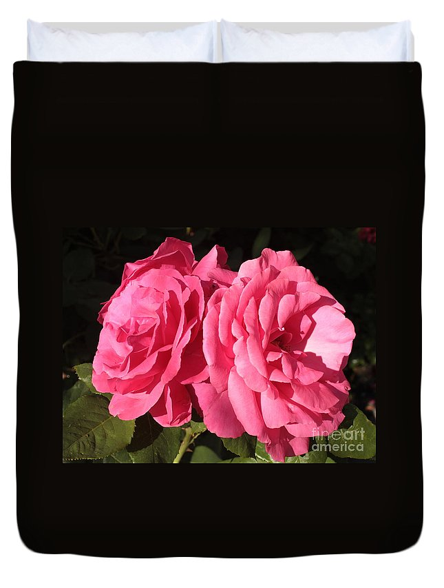 Large Pink Roses Duvet Cover featuring the photograph Large Pink Roses by Carol Groenen