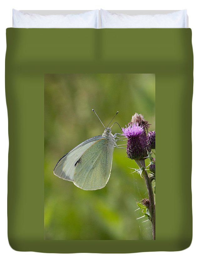 Butterfly Duvet Cover featuring the photograph Large White Butterfly On Thistle by Bob Kemp