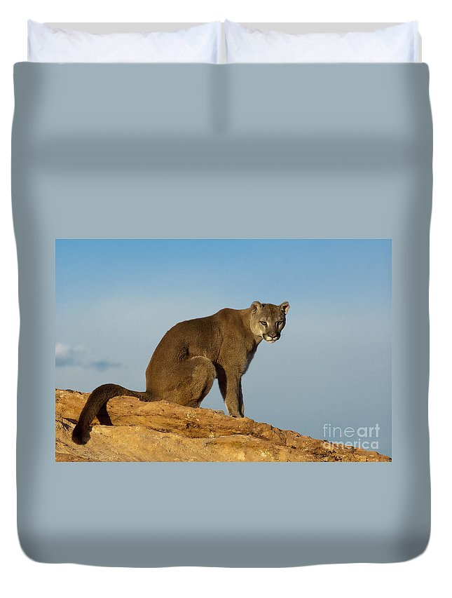 Cougar Duvet Cover featuring the photograph Late Afternoon Foray by Sandra Bronstein