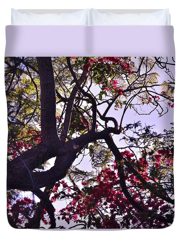 Linda Brody Duvet Cover featuring the photograph Late Afternoon Tree Silhouette With Bougainvilleas IIi by Linda Brody