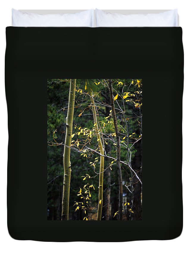 Aspen Duvet Cover featuring the photograph Late Aspen by Jerry McElroy