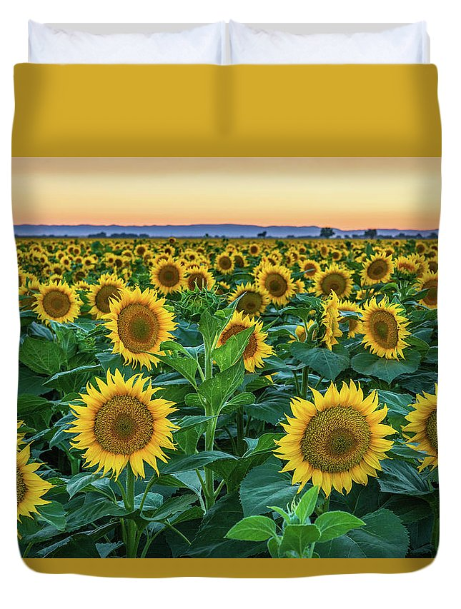 California Duvet Cover featuring the photograph Late Bloomer by Greg Mitchell Photography