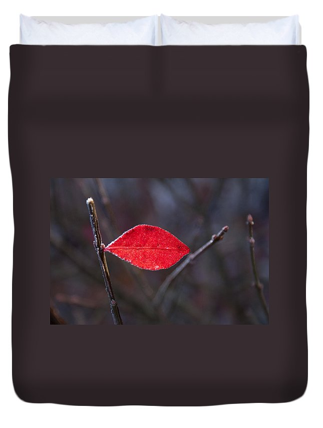 Read Duvet Cover featuring the photograph Lateral Red Leaf by Douglas Barnett